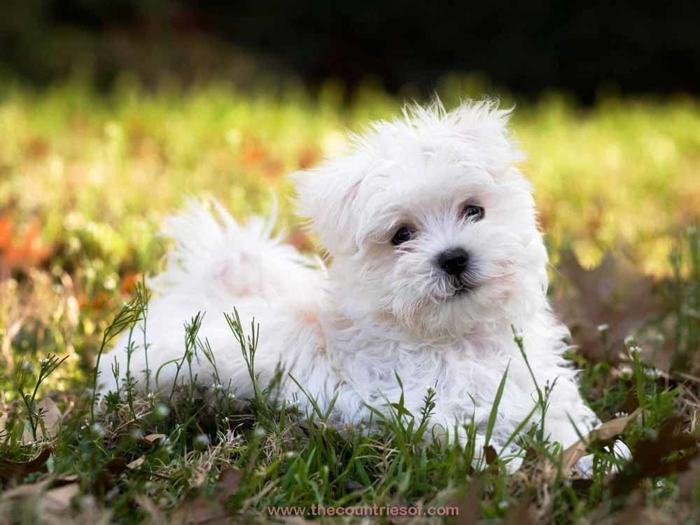 Rank the Top 10 Smartest Dog Breeds | Playbuzz |The Best Pet Dogs