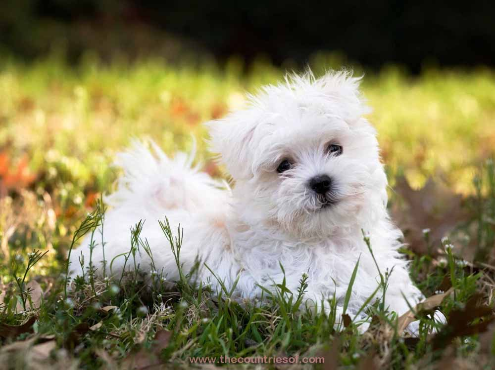 Top 10 Best Dog Breeds In The World 2015 Popular Dog